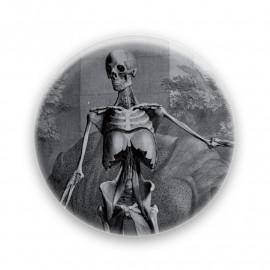 Sceleti et musculorum corporis humani