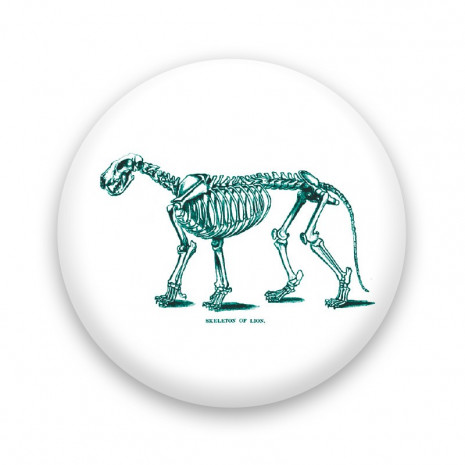 Skeleton of lion