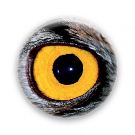 Œil de hibou jaune