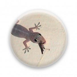 Yumy gecko